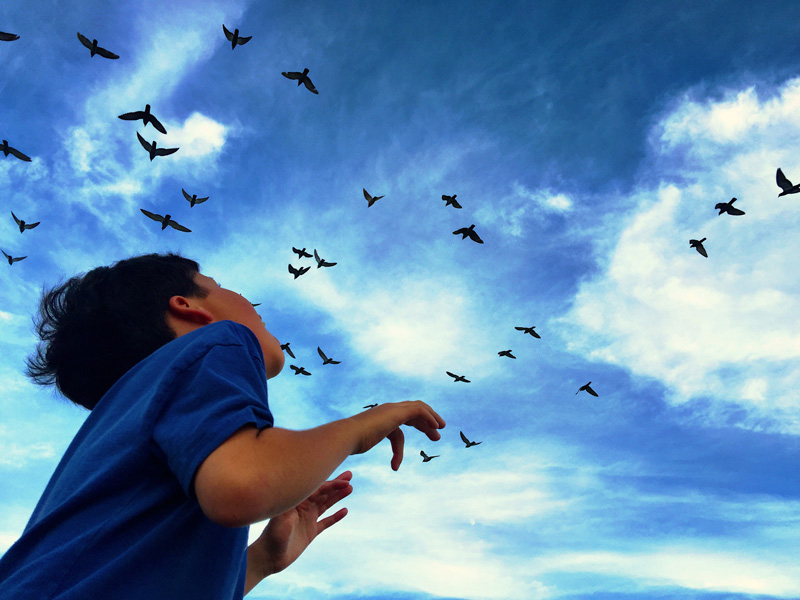 child watching birds in sky